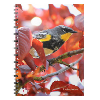 Beautiful Yellow-Rumped Warbler in the Tree Notebooks