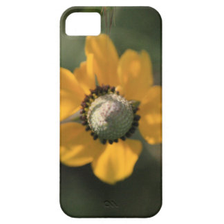 Beautiful Yellow Wildflower iPhone 5 Cover