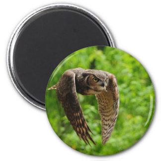 Beauty in flight magnet