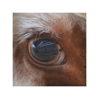Beauty In The Eye Of The Beholder Cow Canvas Print