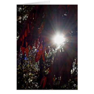 Beauty in the Sumac Card