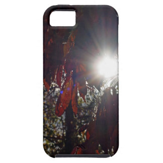 Beauty in the Sumac iPhone 5 Case