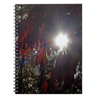 Beauty in the Sumac Spiral Notebook