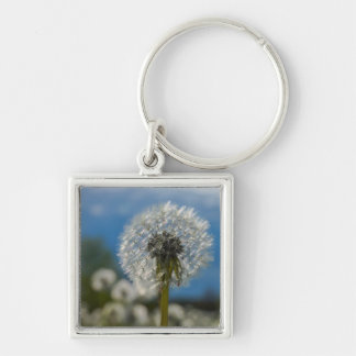 Beauty Of A Dandelion Silver-Colored Square Keychain