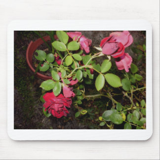 Beauty of a Rose Keepsake Collection Mouse Pads