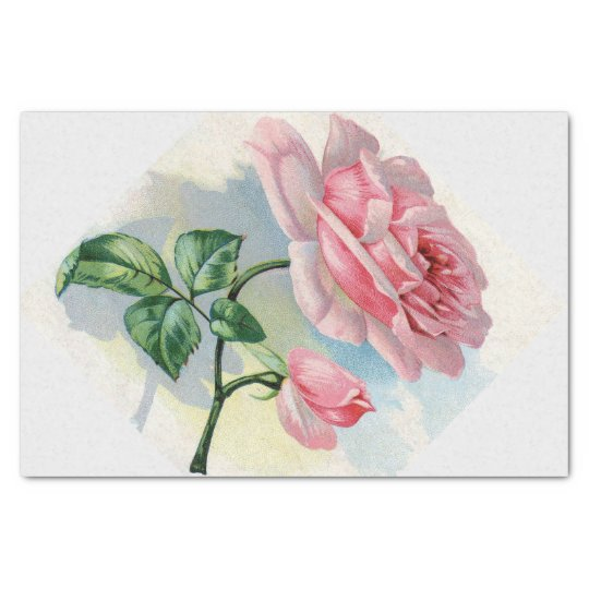 Beauty Rose Pink on Grey Tissue Paper