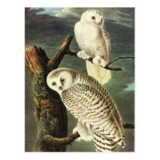 Beaux-arts de hiboux de John James Audubon Carte Postale