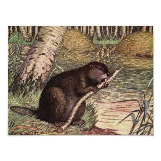 Beaver by Louis Sargent, Vintage Wild Animals Poster