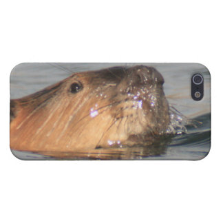 Beaver Face 4/4s iPhone 5/5S Covers