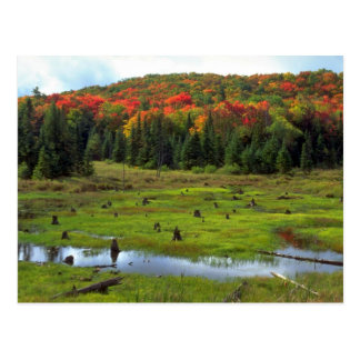 Beaver Meadow and hardwood forest, Quebec, Canada Postcard