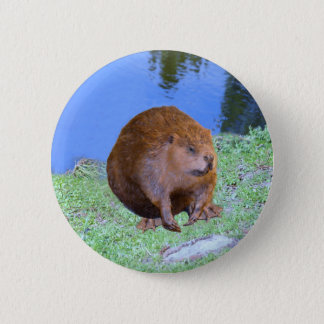 Beaver (Oregon New York) 2 Z .jpg 2 Inch Round Button