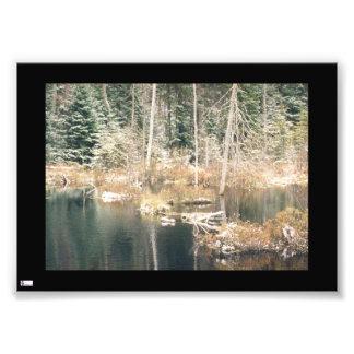 Beaver Pond In Winter Photo Print