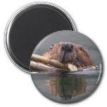 beaver refrigerator magnet