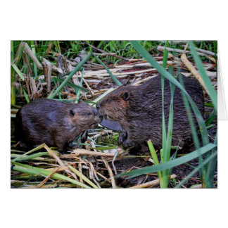 Beavers Kissing Photo Card