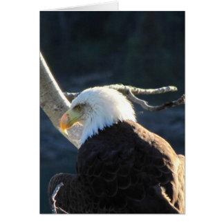 BEC Bald Eagle Contemplation Card