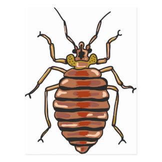Bed Bug Sketch Postcard