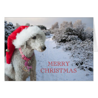 Bedlington terrier Christmas card