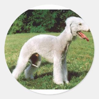 Bedlington Terrier Dog Classic Round Sticker