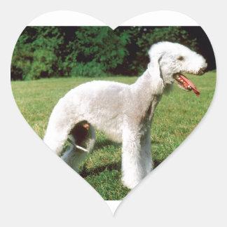 Bedlington Terrier Dog Heart Sticker