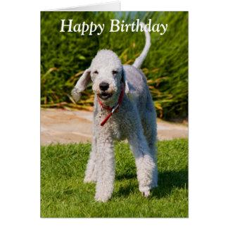 Bedlington Terrier dog photo happy birthday card