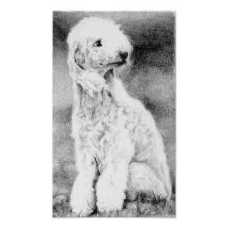 Bedlington Terrier Dog Portrait Poster Print