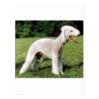 Bedlington Terrier Dog Postcard