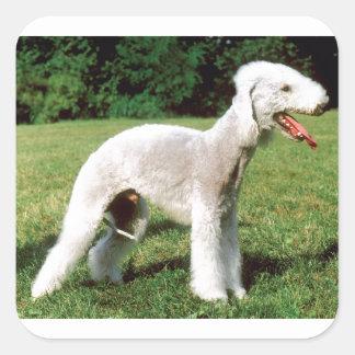 Bedlington Terrier Dog Square Sticker