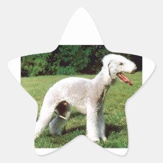 Bedlington Terrier Dog Star Sticker