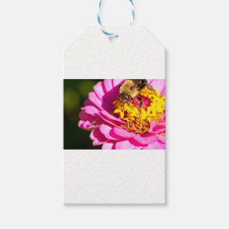 bee and bug standing on a purple flower gift tags