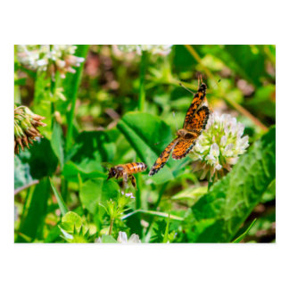 Bee and Butterfly Postcard