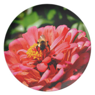 Bee and coral zinnia plate