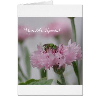 Bee and Pink Flowers | Photo Card
