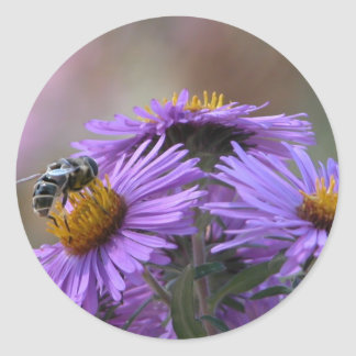 Bee and Purple England  Aster  Round Stickers