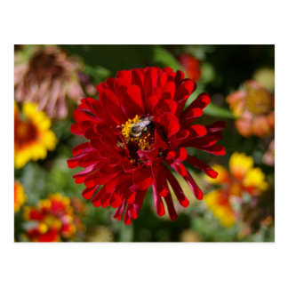 Bee and Red Zinnia postcard