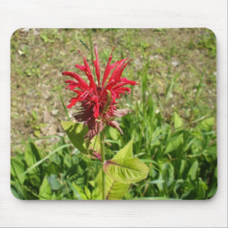 Bee Balm FLower Mouse Pad