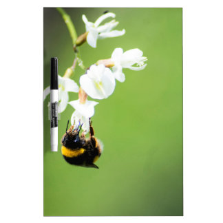 Bee Dry Erase Board