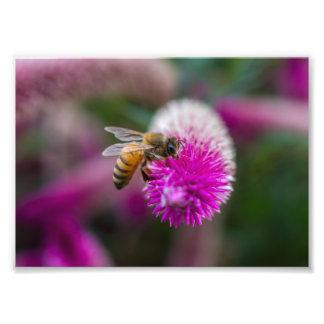 Bee fed photo print