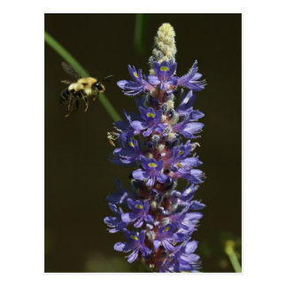 Bee floating to flower postcard