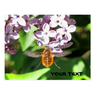 Bee Fly hovering over Lilacs Postcard