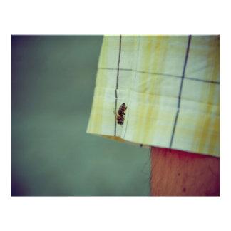 Bee Flyer