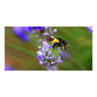 Bee in Lavender Photo Greeting Card