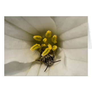 Bee inside of a Trillium Wildflower Notecard