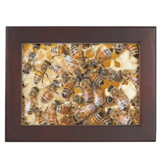 Bee keeping at Arlo's Honey Farm Keepsake Boxes