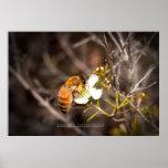 'Bee Mine' Print