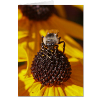 Bee on a Black Eyed Susan Card