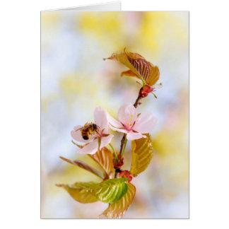 Bee On A Cherry Flower Card