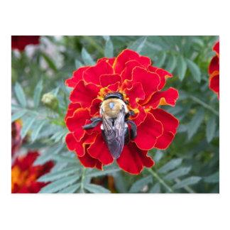 Bee on a Flower Postcard