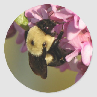 Bee on a Redbud Classic Round Sticker