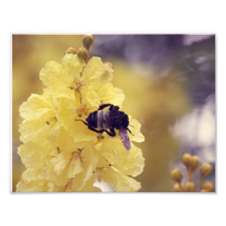 Bee on a yellow flower photo print
