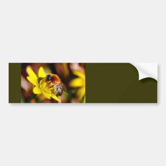 Bee on Celandine Bumper Sticker